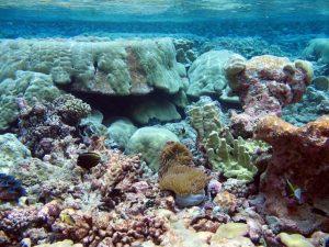 Isla-shallow-reef8