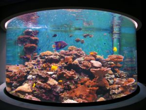 stony coral reef tank in Taiwans national museum of marine bio and aquarium