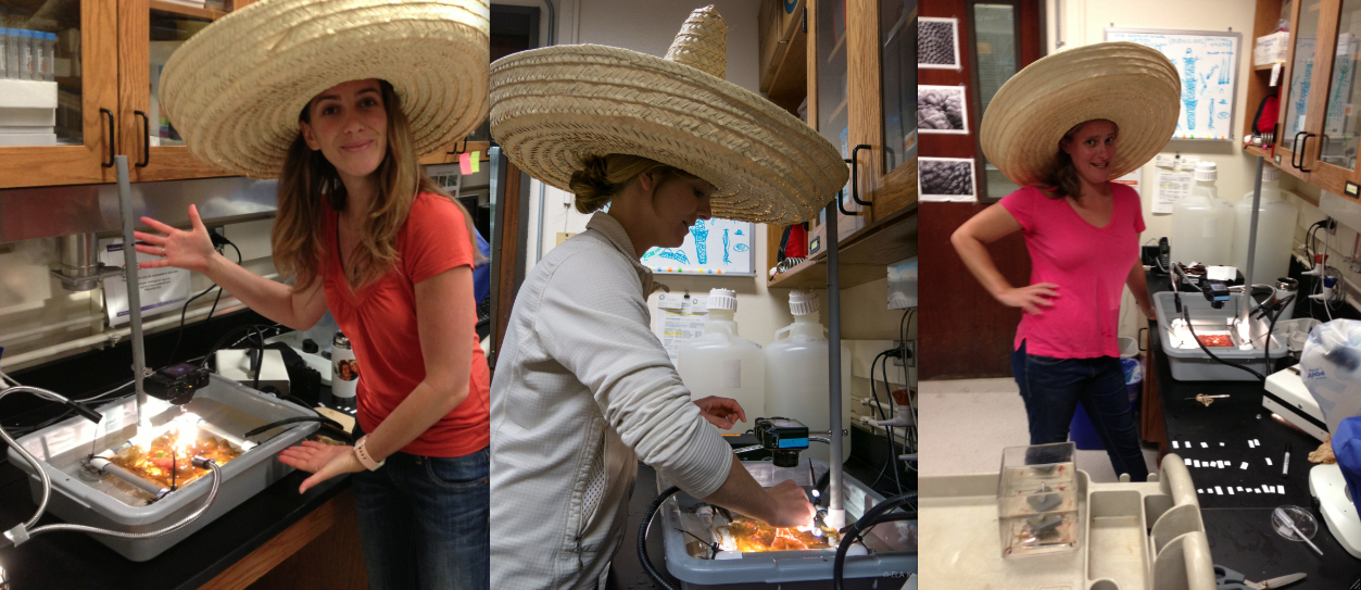 The multipurpose sombrero - it shades-out unwanted glare and makes taking photos of tiles way more fun