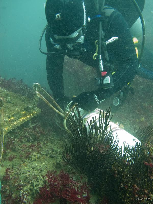 Diver OA article