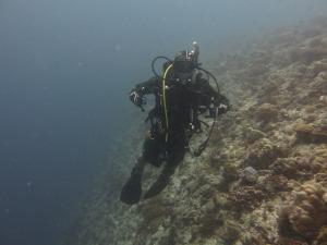 Levi diving