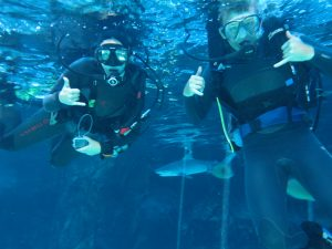 We got to dive in the shark tank at Maui Ocean Center.  Yes, that's a tiger shark.