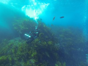 One of the few sites still dominate by native macroalgae.