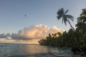 Coconut palms, hermit crabs, and birds dominate the uninhabited islands of Chagos.