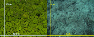 Just as a forest has more complexity than just its canopy (left), tiny turf algae on coral reefs (right) are diverse, complex, heterogeneous systems (photo credit, forest canopy: Pete Oxford, ILCP)